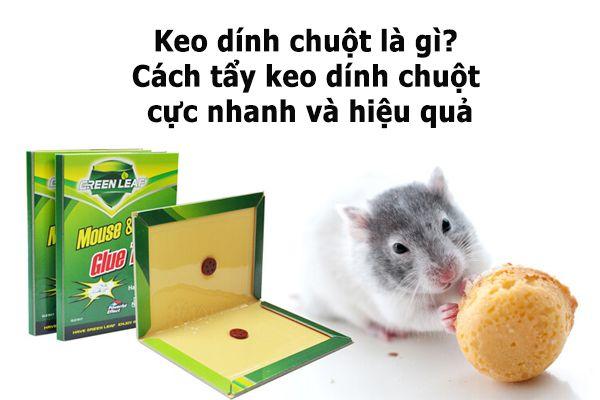 Keo dính chuột là gì? Cách tẩy keo dính chuột cực nhanh và hiệu quả